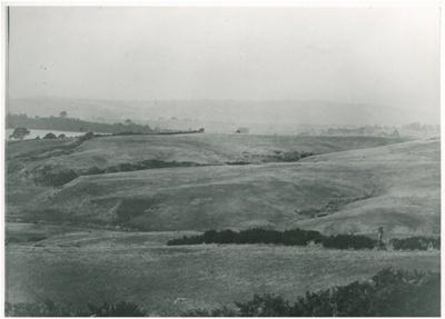 Above Cockle Bay c.1900; Winkleman, Henry; c1900; 2017.195.05