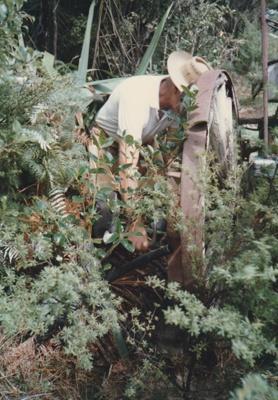 Arthur White clearing Ron Richardson's farm wagon from the bush on the Anawhata farm of Graham Craw. ; La Roche, Alan; c1990; P2020.19.02
