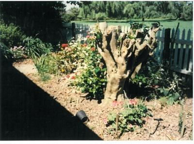 Front garden at Hawthorndene; Hattaway, Robert; 1989; 2016.281.74
