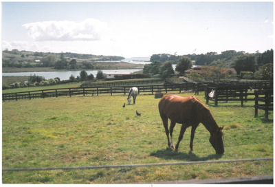 Horses in a paddock in Wood Landing Road; La Roche, Alan; 2009; 2017.092.48