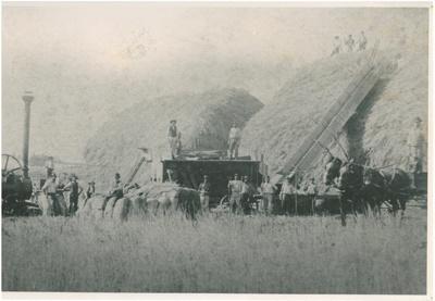 Haymaking at Bryant's Bush, Flat Bush; 1890-1891; 2017.130.00