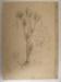 """Te Tutahi"" Cabbage Tree; Col. Arthur Morrow (1842-1937); 2010.47.1"