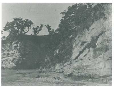 Waitemata series strata rock at Musick Point; Fairfield, Geoff; c1930; 2016.604.03