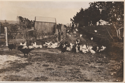 Poultry at Glenfern Homestead.; c1930; 2018.028.01