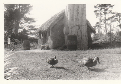 Two ducks in front of the Sod Cottage, Howick Historical Village  ; La Roche, Alan; P2020.43.27