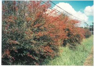 Hawthorndene Driveway; Hattaway, Robert; 1988; 2016.258.41