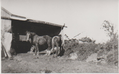 2 horses standing in front of a shed; 1930; 2017.444.29