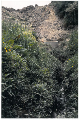 A drain on Pakuranga Creek; La Roche, Alan; c1995; 2016.493.92