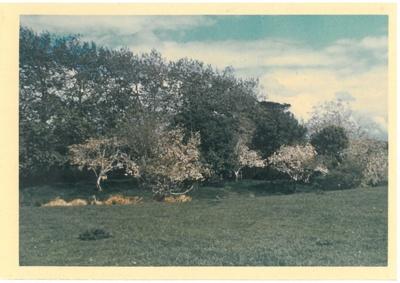 Spring, Hawthorn Farm, 1947.; Hattaway, Robert; 1947; 2016.278.63