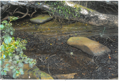 Stepping stones over the Mangemangeroa Creek; La Roche, Alan; 1/08/2011; 2017.093.49