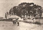 Hawthorn Farm, Howick, 1888.; 1888; 3049