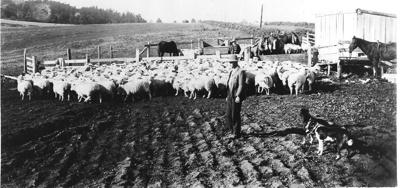 FitzGerald's farming at Grammar School Reserve [no...