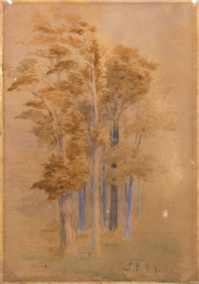 Totara and Pine, Baigent's Bush, Wakefield; John GULLY; 2