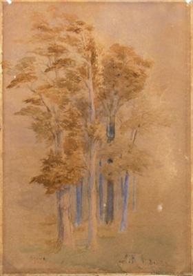 Totara and Pine, Baigent's Bush, Wakefield; John GULLY; 2