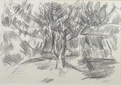 Magnolia Tree in Moonlight, Greymouth; Toss WOOLLASTON; 1959; 466