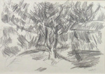 Magnolia Tree in Moonlight, Greymouth; Toss WOOLLASTON; 1959; 466