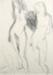 Suter Nude; Toss WOOLLASTON; 1977; 543