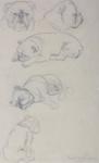 Bulldog Study; Lady Mabel ANNESLEY; 622