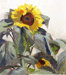 Sunflower; Ivy FIFE; 1961; 338