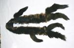 Stole; 2004/0240
