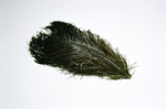Ostrich Feather; 2004/0034