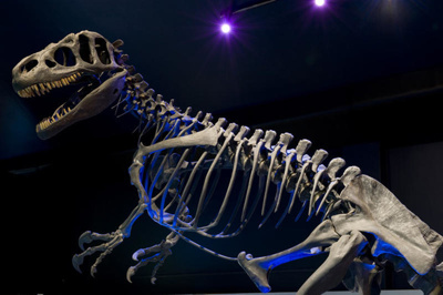Replica dinosaur skeleton, 2008.67.1