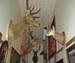 Deer in Hallway, 10