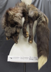 Fox fur stole; Unknown; early 20th Century; 2002_274