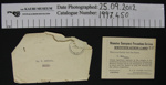 Home Guard documents; Otamatea EPS; 1939-1945; 1997_450