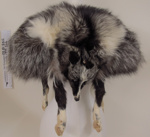 Fox fur stole; Unknown; c.1948-52; 1999_246