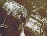 A felled Kauri., HM07