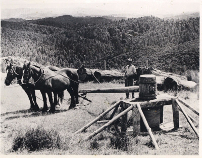 A Whim used to move logs., TC8355