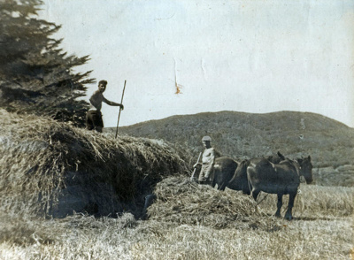 Haymaking., HM13