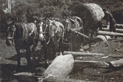 A horse team., HM10