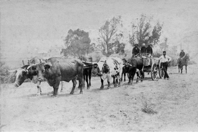 Bullocks on Bow Street, Chemist & Landscape Photography   New North Rd Auckland NZ, 1890, 1969.44.6