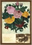 Ernest Moon - 'Roses', Moon, Ernest Collins  Te Uku Raglan NZ, 1900's, X001.33.29