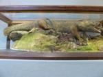 Tuatara; Zoology/vertebrates; Western Hills, Whangarei; T204