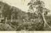 Photograph [Suspension bridge, Houipapa]; [?]; [?]; CT79.1022b