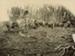 Photograph [Bullock Team Hauling Log]; [?]; [?]; CT78.1004a.6