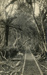 Photograph [Sawmill Tramline, Catlins Bush]; [?]; Early 1900s; CT78.1008b