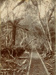 Photograph [Tramway]; [?]; [?]; CT78.1002a5