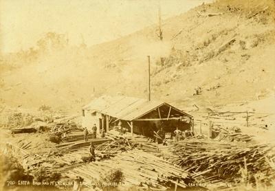 Photograph [Latta Bros & McLachlan mill, Ahuriri Flat]; Randall, George T (Mr); 1909-1910; CT78.1004a1