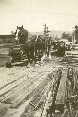 Photograph [Stuarts Railway Station]; [?]; c1924; CT87.1753b