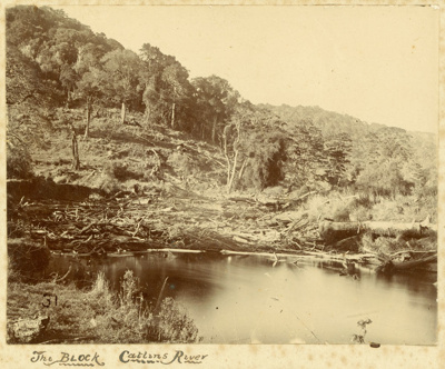 Photograph [The block, Catlins River]; Randall, George T (Mr); [?]; CT79.1028c