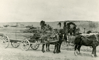 Photograph [Team and wagon, Tahakopa Station]; [?]; [?]; CT79.1262b