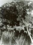 Photograph [Catlins River, 1904]; [?]; 1904; CT89.1889.7