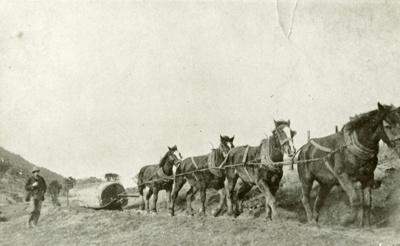 Photograph [Horses hauling log]; [?]; [?]; CT78.1003a1