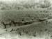 Photograph [Hauling logs to sawmill]; [?]; January 1910; CT89.1888.6