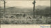 Newspaper clipping [photograph of Owaka Valley, c1920]; Patrick, J H ; c1920; CT86.1837a
