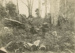 Photograph [Cutting Firewood in the Bush, The Catlins]; [?]; Early 20th century; CT79.1027c